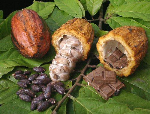 La Ruta del Cacao, Tabasco