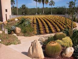 Cactimundo, Baja California Sur