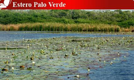 Estero Plao Verde, Colima