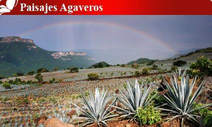 Paisajes Agaveros, Jalisco