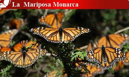 La Mariposa Monarca, Michoacán