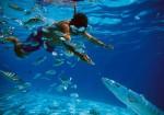 Lo mejor del submarinismo en Huatulco