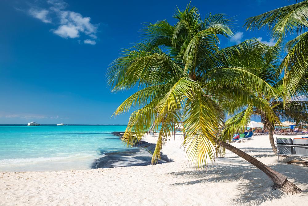 coconut-palm-on-caribbean-beach-cancun-mexico
